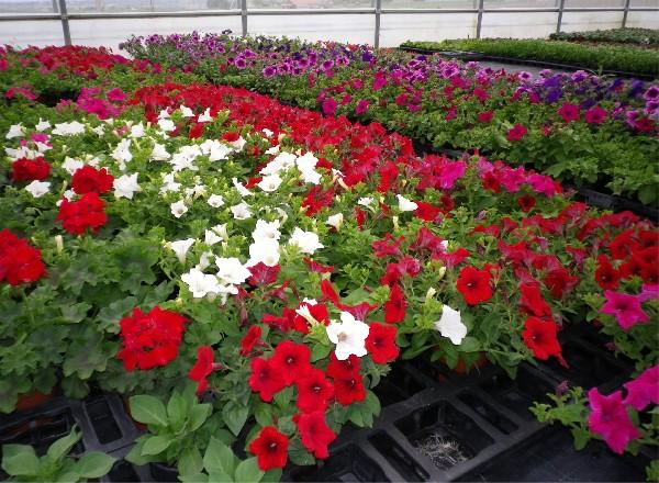 et blanc, rouge, rose.<br /> 6 coloris au choix pour la PROMO de mai.