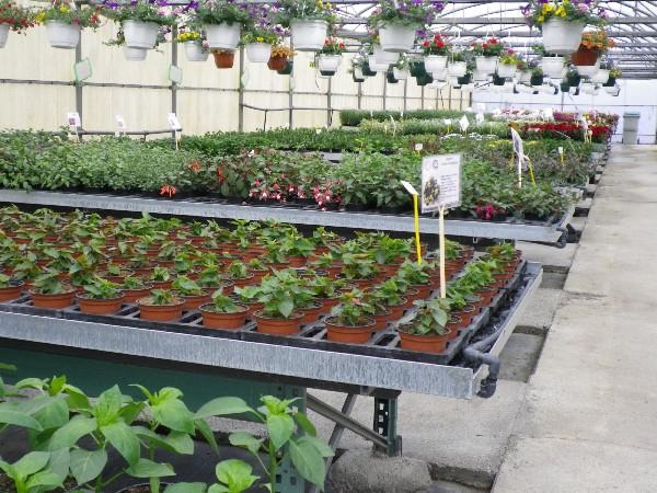 Et des plants de légumes, une 40ène de variété.
